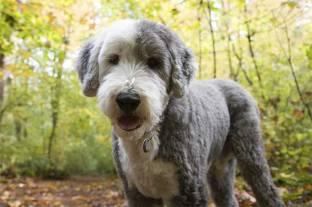 puppy-8.jpg